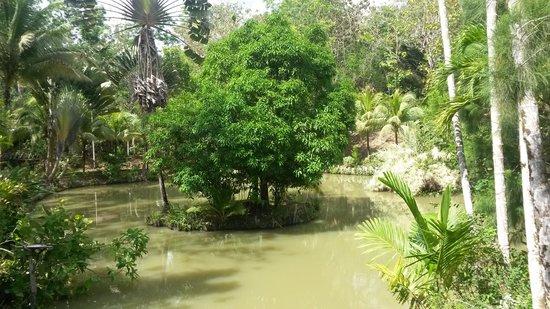 Sepilok Jungle Resort : view at breakfast