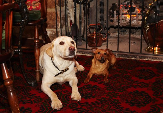 The Rose & Crown: Dogs Welcome