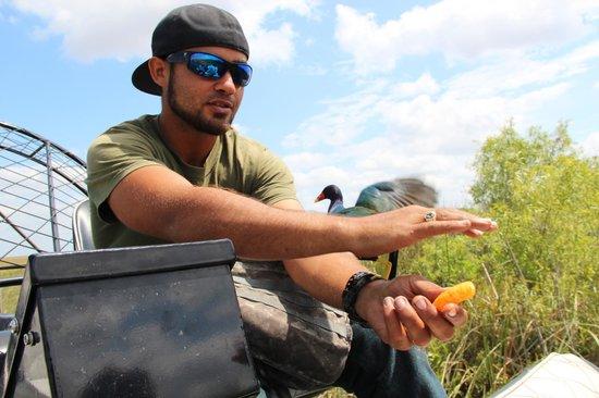 Airboat In Everglades : Tourguide Willie beim Füttern seiner Lieblingsvögel