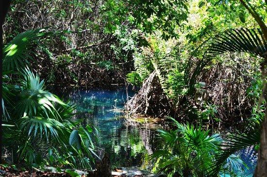 Sandos Caracol Eco Resort: Teren resortu