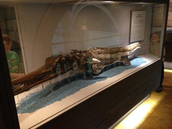 Bristol Museum & Art Gallery: Fossils.