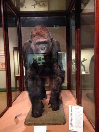 Bristol Museum & Art Gallery: Animals