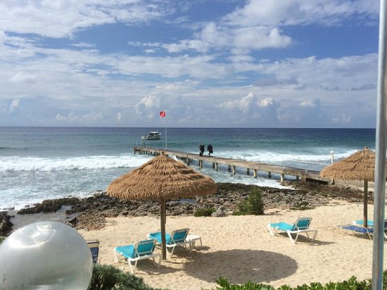 Cobalt Coast Grand Cayman Resort: Out back.