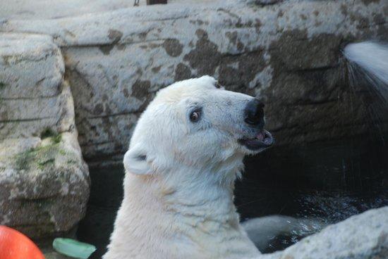Ehime Tobe Zoo : TOBE ZOO 3