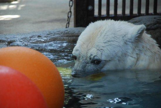 Ehime Tobe Zoo: TOBE ZOO 4