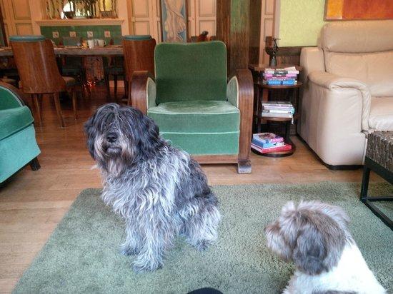 Le Macassar: The dogs!