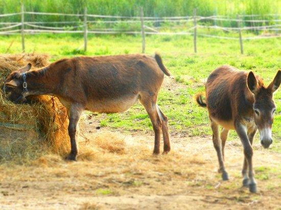 Montebelli Agriturismo & Country Hotel: ...donkeys