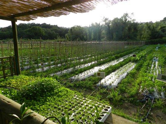 Montebelli Agriturismo & Country Hotel: l'orto