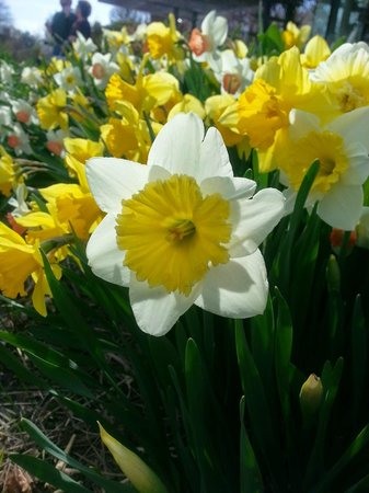 Edwards Gardens: Beautiful Spring Experience