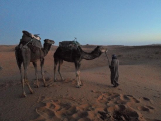 Merzouga Desert: Camels