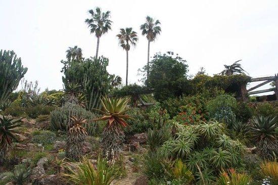 Jardi Botanic Marimurtra : Le jardin