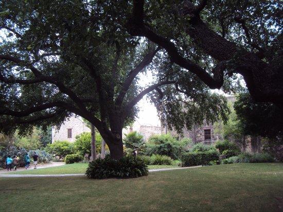 Alamo Plaza: Gardens.