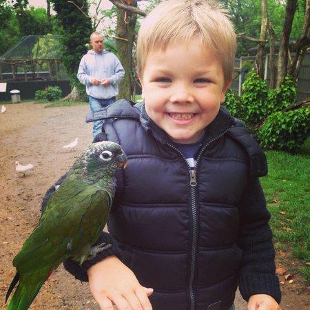 Tropical Birdland: My little boy with a parrot