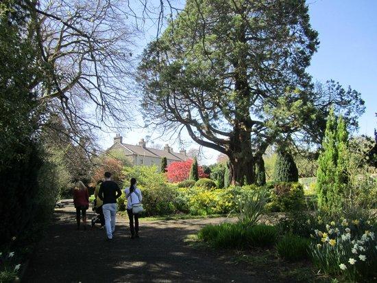 St. Patrick's College : garden