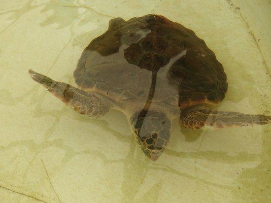 Aquarium Laguna di Nora: One of the turtoises at the aquarium