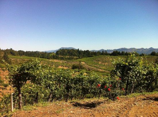 Schweiger Vineyards: A view of the rolling vineyards at Schweiger