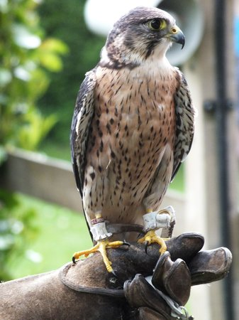 Liberty's Owl Raptor and Reptile Centre: The name of this bird ' Bullet '