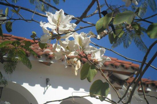 Province of Formosa, Argentina: Plantas de flores en las calles de Formosa