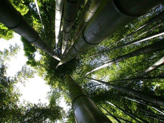 La bambouseraie d 39 anduze bild von la bambouseraie en c vennes generargues tripadvisor - La bambouseraie a anduze ...