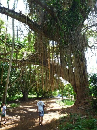 Honolua Bay: The walk in to the Bay