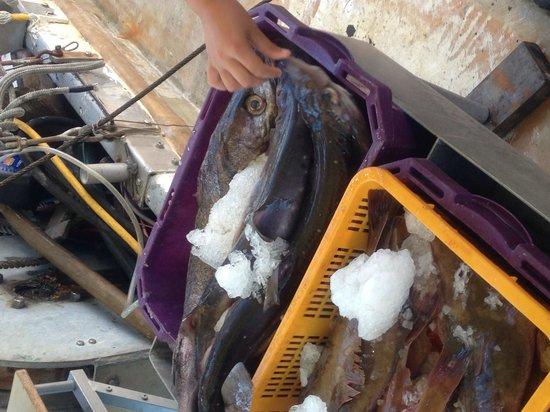 Steveston Heritage Fishing Village : Fresh!