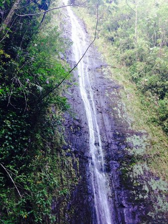 Manoa Falls: 100ft Waterfall at the end of the hike