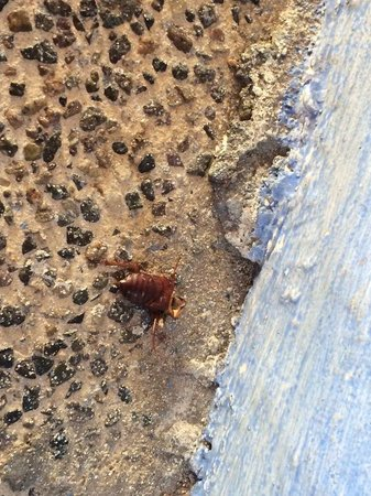 Las Palmas by the Sea : Cockroach on the walkway outside