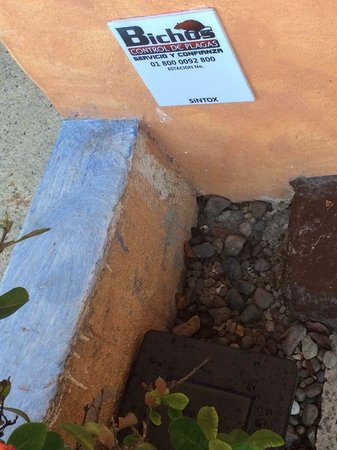 Las Palmas by the Sea : Rodent trap on our patio