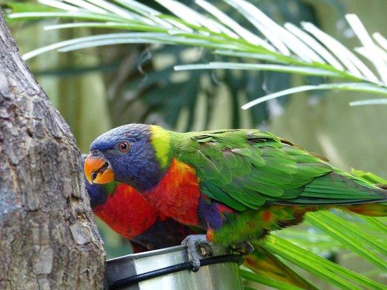 Touroparc Zoo : ?