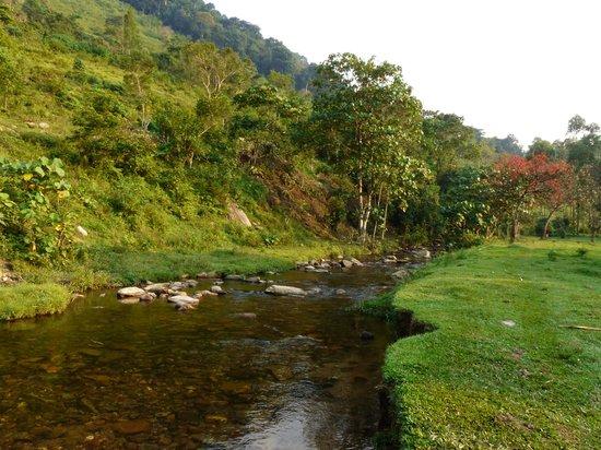 stream running behind Mahogany Springs Lodge