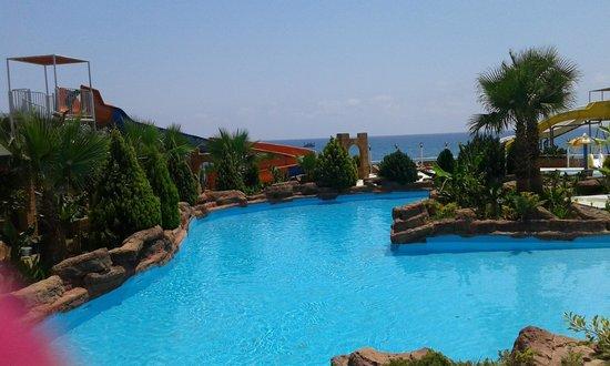 Cudowne kaktusy - Foto di Sealanya Dolphinpark, Antalya ...