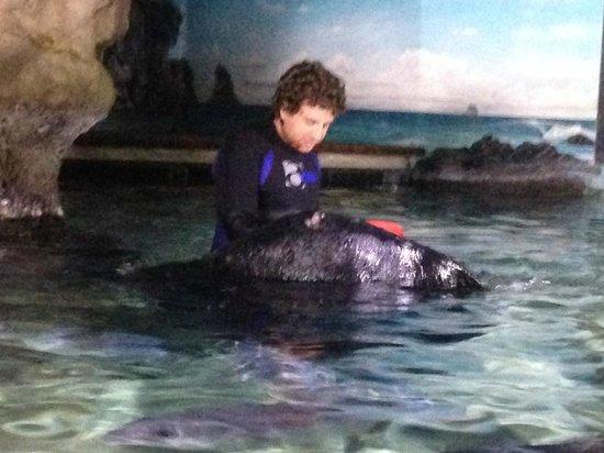 Kelly Tarlton's Sea Life Aquarium : Feeding time for the sting rays