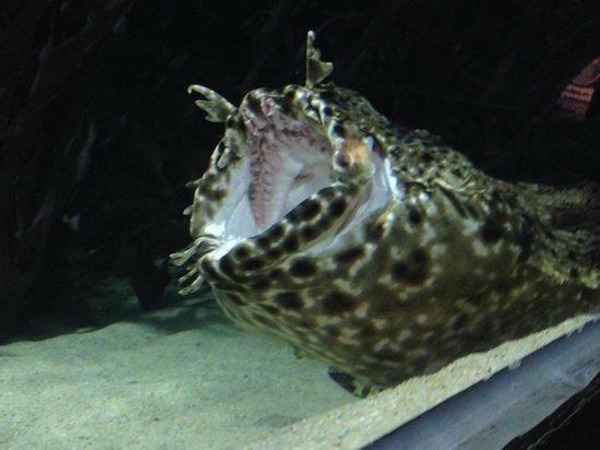 Kelly Tarlton's Sea Life Aquarium : the Earth is a strange planet
