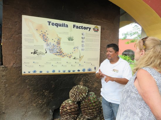 Free Tequila Tour By Casa Mission: Tour guide