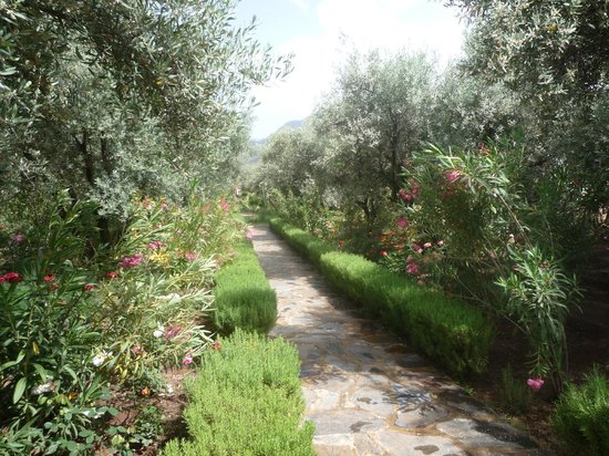 L'Oliveraie de Marigha: Hotelanlage / Hotelgarten -  Garden