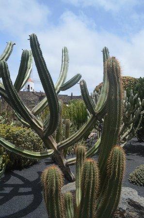 Jardín de Cactus: jardin de cactus