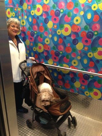 Inn at Northrup Station: Elevator - accommodated our Service Dog!