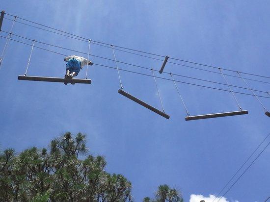 Bradenton, FL: Tree Umph! Lead Course