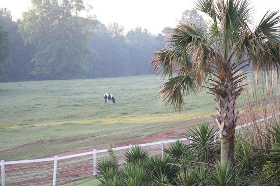 Southern Cross Ranch: Horses