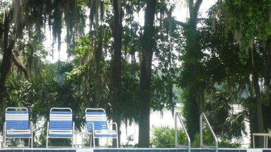 Wyndham Garden Gainesville : Pool mit Seeblick