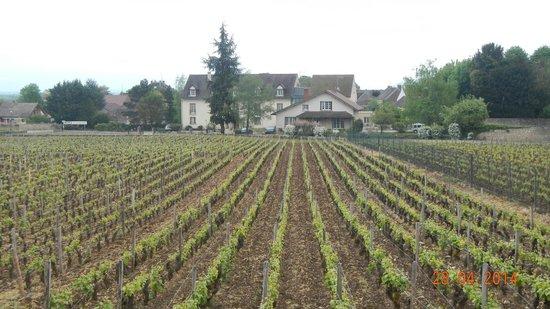 Hotel Les Grands Crus: Frente do hotel com plantação de uvas na frente