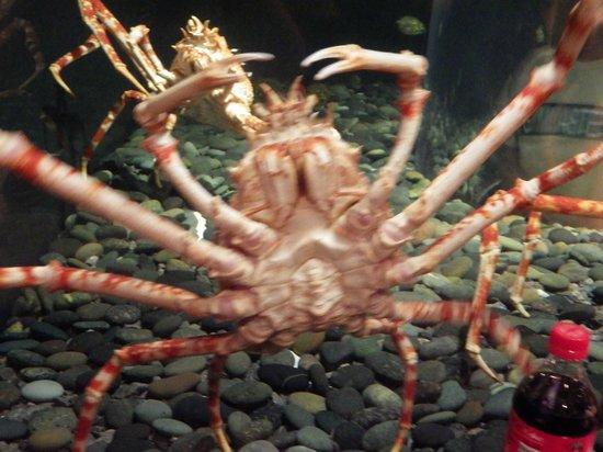 Tennessee Aquarium: exhibit