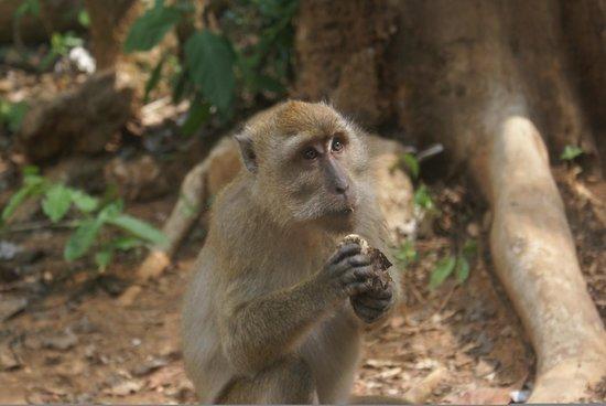 Khao Sok Valley Lodge : Monkey Temple