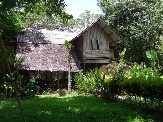 Khao Sok Valley Lodge : The Lodge
