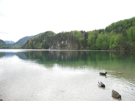 Alpsee: East side of the lake