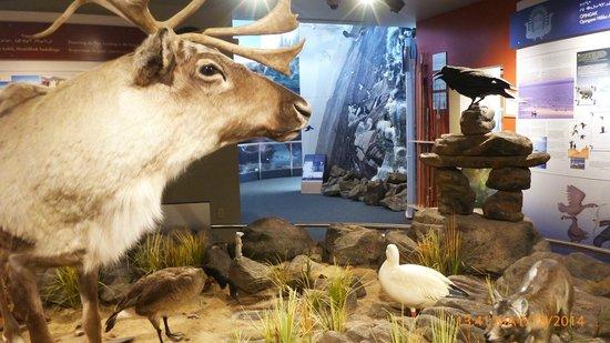Unikkaarvik Visitor Centre : Main level display