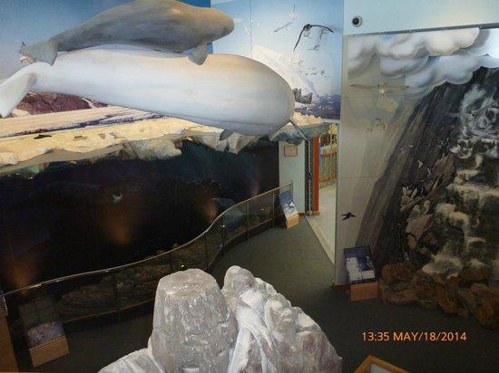 Unikkaarvik Visitor Centre : Display