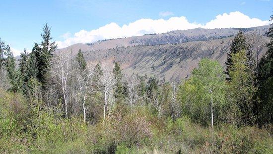Bethel Ridge Retreat: Springtime view from Aspen View Lodge