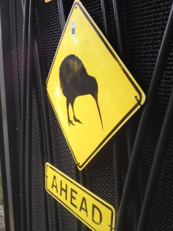 Auckland Zoo : KIWIs in a dark place.
