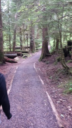 The trail up - Picture of Bagby Hot Springs, Estacada - TripAdvisor